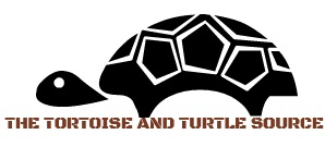 Logo the tortoise and turtle source